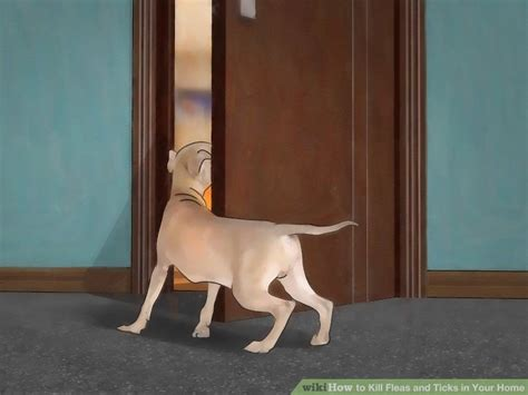 how to kill dog ticks in the house how to kill ticks in the house 28 images how to remove fleas and ticks from your