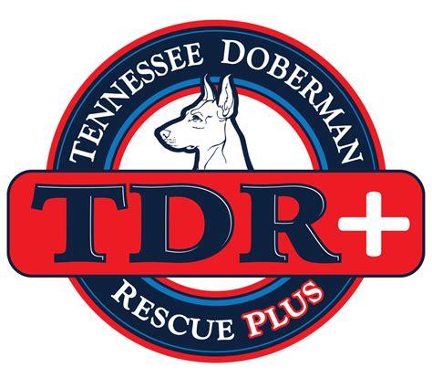 tennessee rescue tennessee doberman rescue a pinsch of heaven doberman rescue