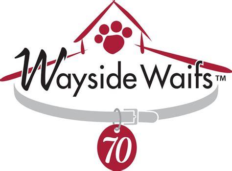 wayside waifs dogs adoptable dogs wayside waifs
