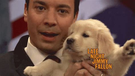jimmy fallon puppies jimmy fallon gif find on giphy