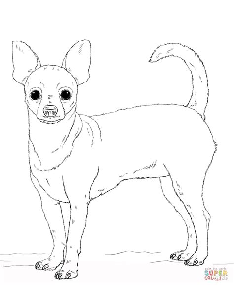 Chihuahua Colouring Pages Chihuahua Dog Coloring Pages Download And Print For Free by Chihuahua Colouring Pages