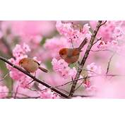 Two Birds Branches Pink Flowers Spring Wallpaper