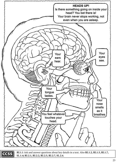 anatomy and physiology coloring workbook answers page 84 965 best a p images on studying human