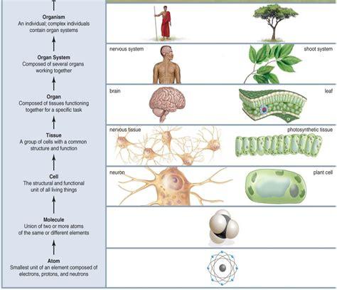 levels of organization diagram flashcards zoology exam1 physiology anatomy studyblue
