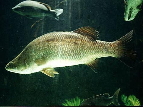 How To Raise Tilapia In Your Backyard by Backyard Aquaculture Raise Fish For Profit Nourish The