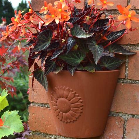 sunflower wall pot terracottaukcom hand  uk