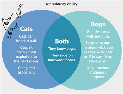 compare and contrast cats and dogs venn diagram firstline magazine on quot venn diagrams about why we