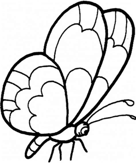 mewarnai gambar kupu kupu dengan bagus belajar mewarnai