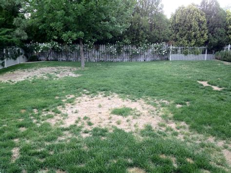 grass how can i fix a lawn which has become patchy gardening landscaping stack exchange