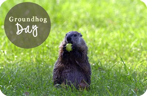 groundhog day time happy groundhog day just in time care services