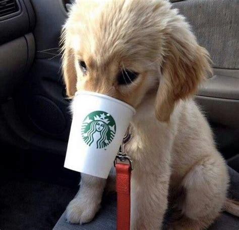 starbucks puppy cup cup starbucks image 3199978 by saaabrina on favim
