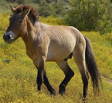 Hourse Matting by Horses Mating Pics Horses Mating Donkeys Breeds Picture