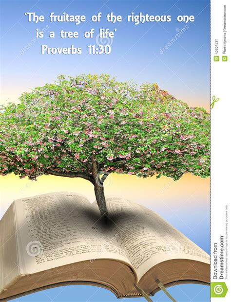 tree in bible tree of bible stock photo image 40304531