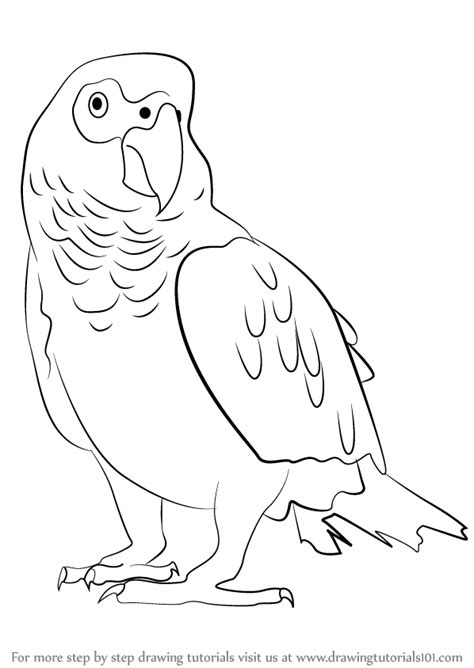 vintage line art tutorial african grey parrot clipart black and white