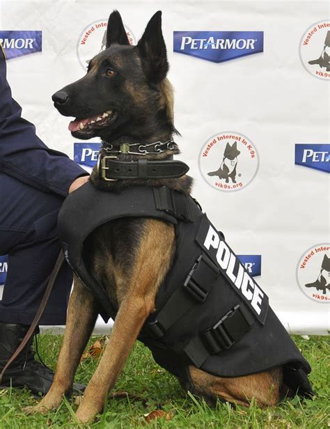 careers with dogs 15 dogs with that put your career to shame