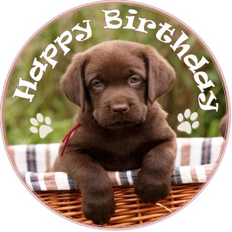 puppy happy birthday birthday wishes with puppies page 5