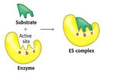 inhibidor enzimatico tipos enzimas mind42