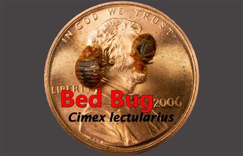 best bed bug exterminator nyc bed bugs in nyc learn the faq best bed bug exterminators