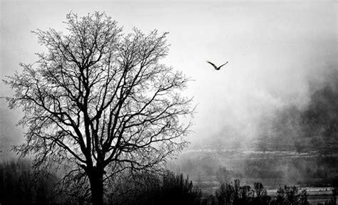 imagenes en blanco y negro de la tierra mario tejedor versos en blanco y negro