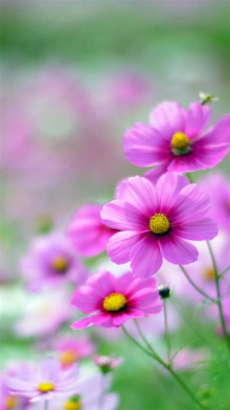 flower wallpaper for android phone 100 hd phone wallpapers for all screen sizes