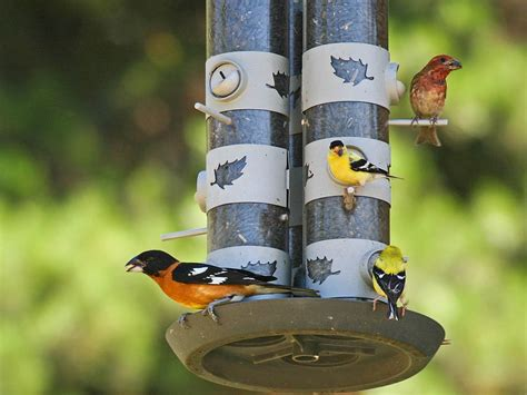 what bird feeders attract birds home improvement