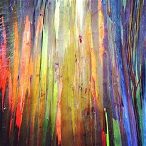 patterns in nature rainbow rainbow eucalyptus tree bark texture nature s patterns