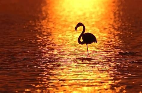 Flamingo Sunset file flamingo at sunset jpg wikimedia commons