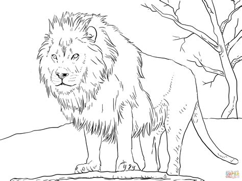 Male Lion Coloring Pages | male african lion coloring online super coloring
