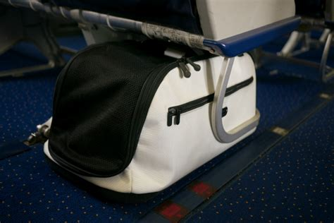 Delta Pet In Cabin by Sleepypod Air Pet Carrier Likes This