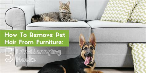 how to remove pet hair from couch how to remove pet hair from furniture 5 life changing
