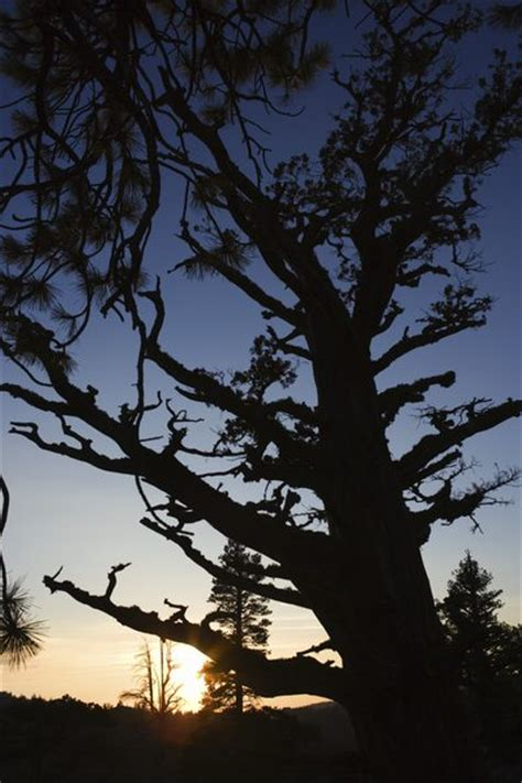 homeowners insurance coverage for tree does homeowners insurance cover a dead tree on my property budgeting money