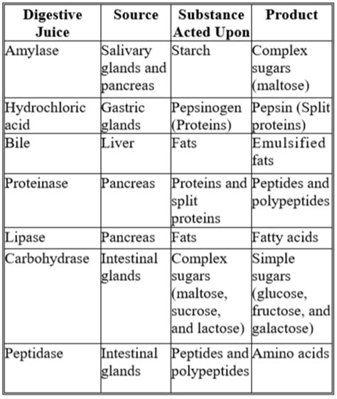 digestive enzymes and their functions table digestive enzymes table pixshark com images