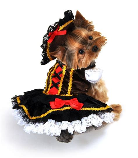 pirate puppy top 10 cutest costumes for small dogs