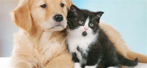 ufficio diritti animali uda i diritti di cani e gatti paradiso a 4 ze