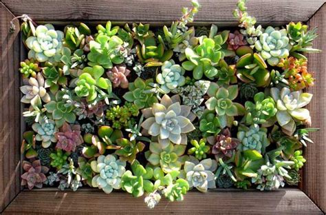 White Wall Bedroom Ideas great ways to celebrate with succulents