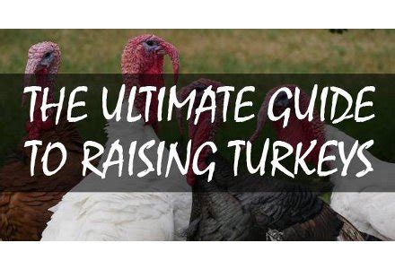 the best the ultimate guide to raising a healthy lovin books the ultimate guide to raising turkeys oath keepers
