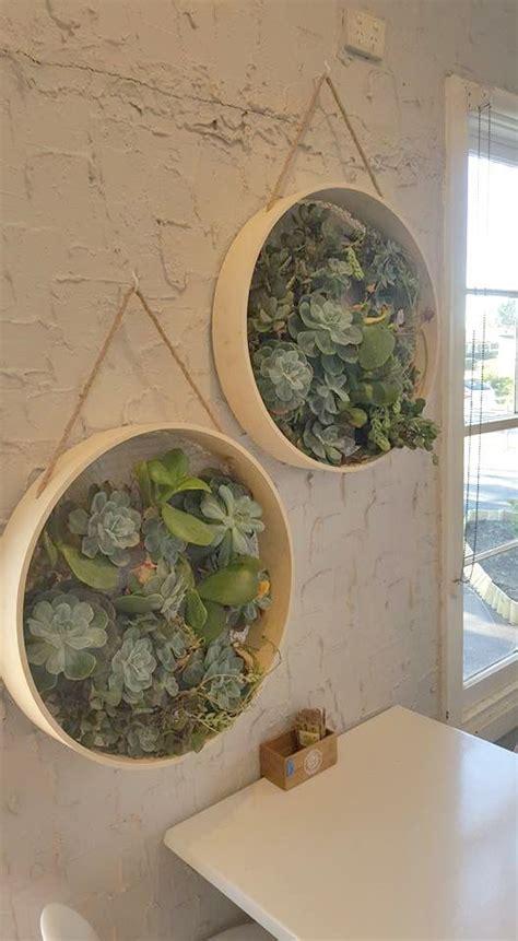 coolest kmart hacks  succulents garden