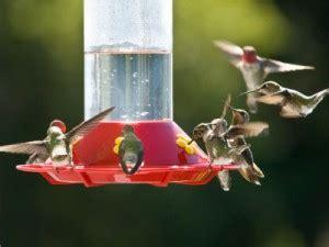 hummingbird feeders new braunfels feed supply