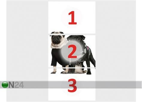 pug breeders ta kuvatapetti posh pug dogs 100x210 cm ed 76685 on24 sisustustavaratalo