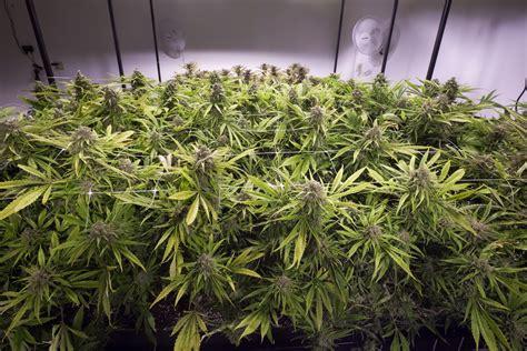Canadian Homes by Dea Marijuana Homegrows Are The New Meth Houses Marijuana