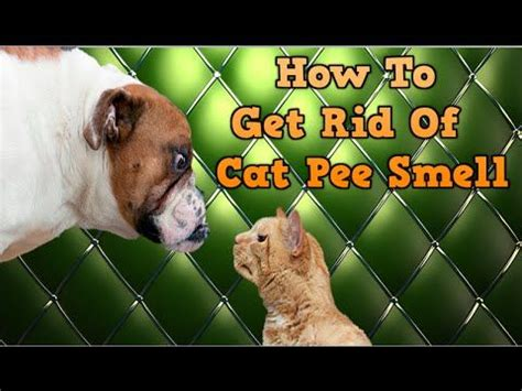 Best Way To Get Cat Urine Out Of by Best Way To Get Urine Smell Out Of Carpet 28 Images