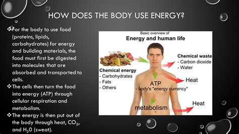 carbohydrates for energy nutrition and energy ppt