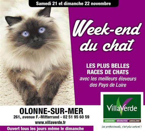 week end du chat 224 villaverde olonne sur mer