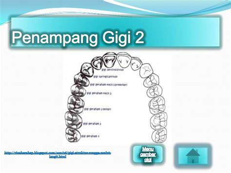 Gigi Asli Manusia Pedo Gigi Anak Geraham Molar Kedua Rb pencernaan pada manusia dan ruminansia uas