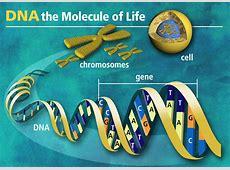 DNA « fenbilimleri Y Chromosome