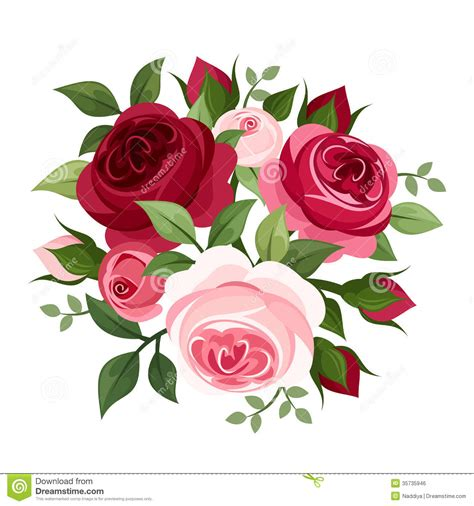 pink and red roses photo red and pink roses stock vector illustration of hybrid