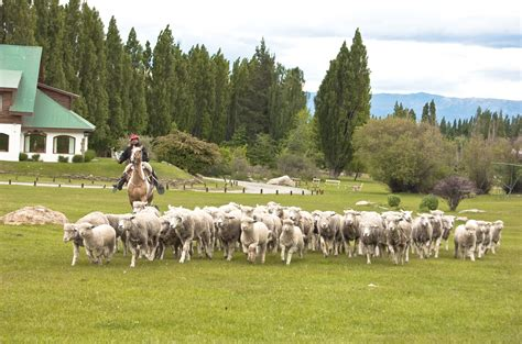 how to a herding essay on the herding or pastoral societies
