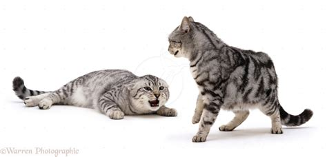 how to your to be aggressive learn 12 smart ways to stop your cat to be aggressive