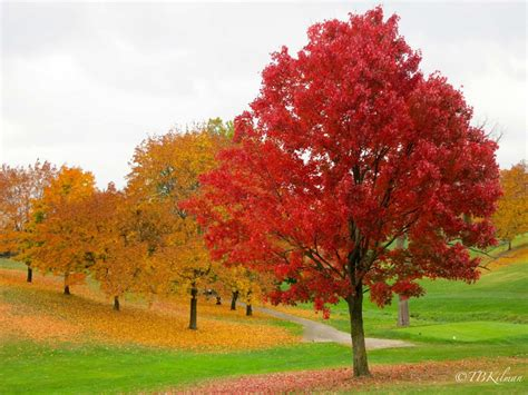 as the fall foliage floats to the ground