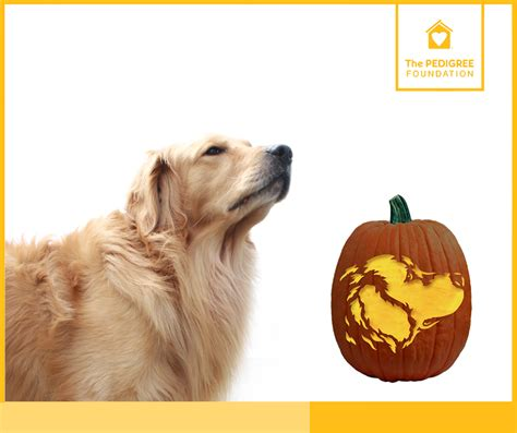 puppy pumpkin puppy pumpkin carving stencils pedigree foundation